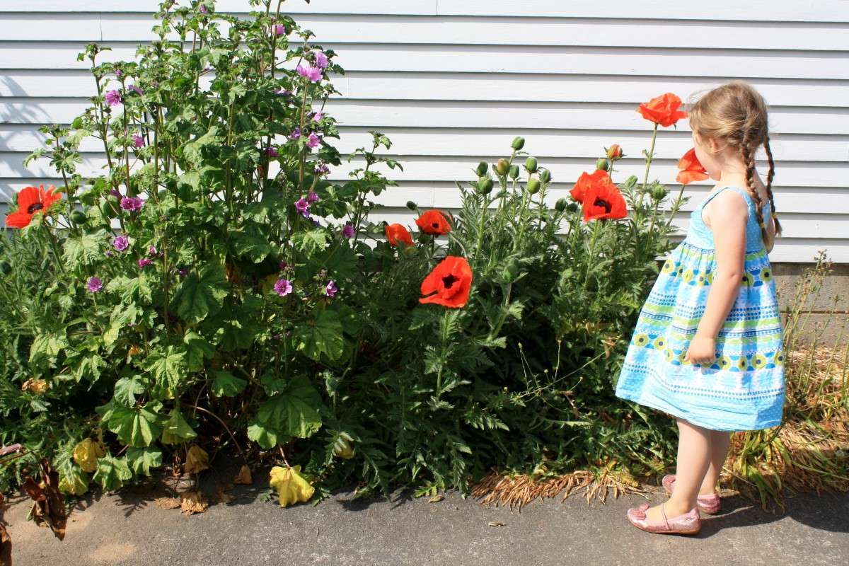 In the poppies   Little Book, Big Story